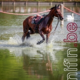 2017-07-06-Equino-115