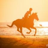 portfolio-equine-1