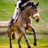 portfolio-equine-12