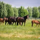 portfolio-equine-121