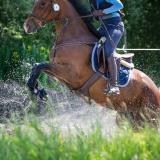 portfolio-equine-15-16
