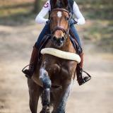 portfolio-equine-15-2