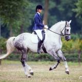 portfolio-equine-15-30