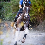 portfolio-equine-15-34