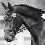 portfolio-equine-15-37