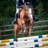 portfolio-equine-15-38