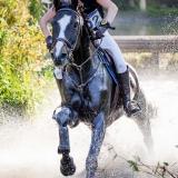 portfolio-equine-15-40