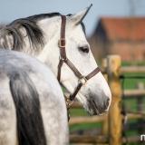 portfolio-equine-15-41