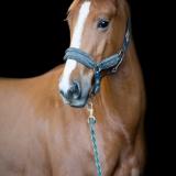 portfolio-equine-15-43