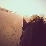 portfolio-equine-15-5