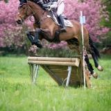 portfolio-equine-15-9