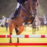 portfolio-equine-15