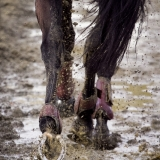 portfolio-equine-16