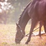 portfolio-equine-174