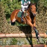 portfolio-equine-181