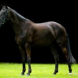 portfolio-equine-19