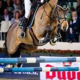 portfolio-equine-2