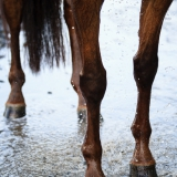 portfolio-equine-28