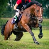portfolio-equine-3