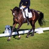 portfolio-equine-34
