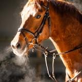 portfolio-equine-5