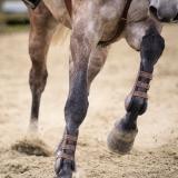 portfolio-equine-52