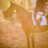 portfolio-equine-7