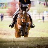 portfolio-equine-8