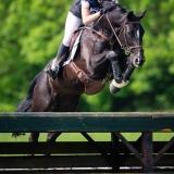 portfolio-equine-95